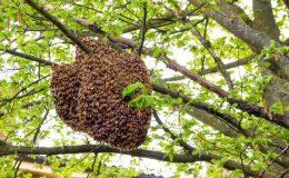 木の上にできた巣