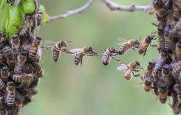 面白い行動をするハチ